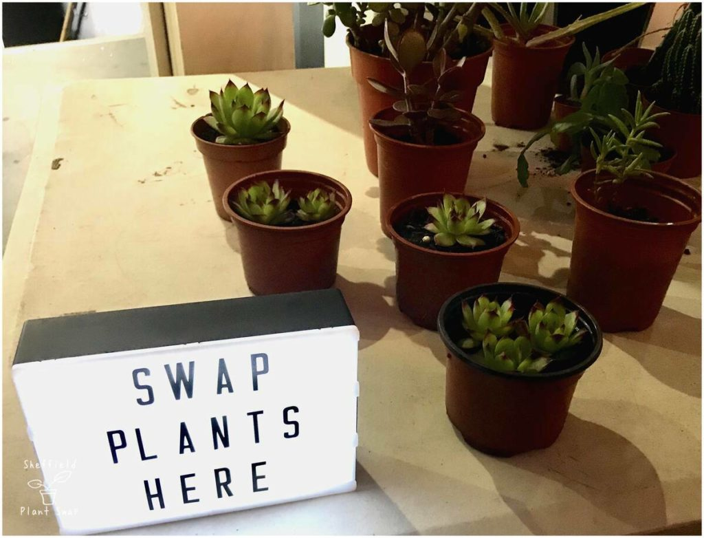 Lightbox sign saying Swap Plants Here