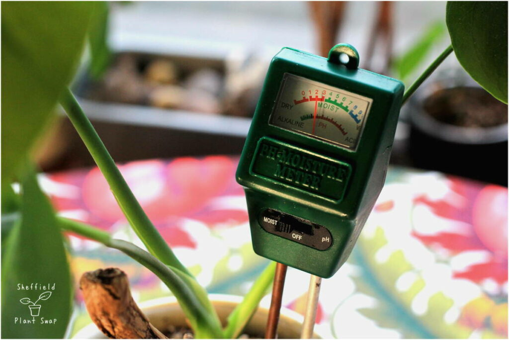 Using a moisture meter to test when to water your houseplant
